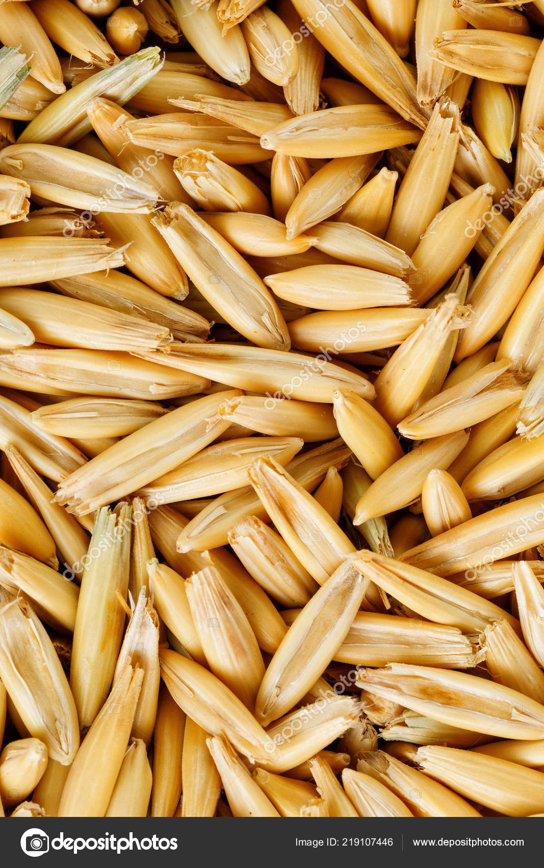 hight resolution of natural oat grains background closeup vegetarian food photo by alex1 3