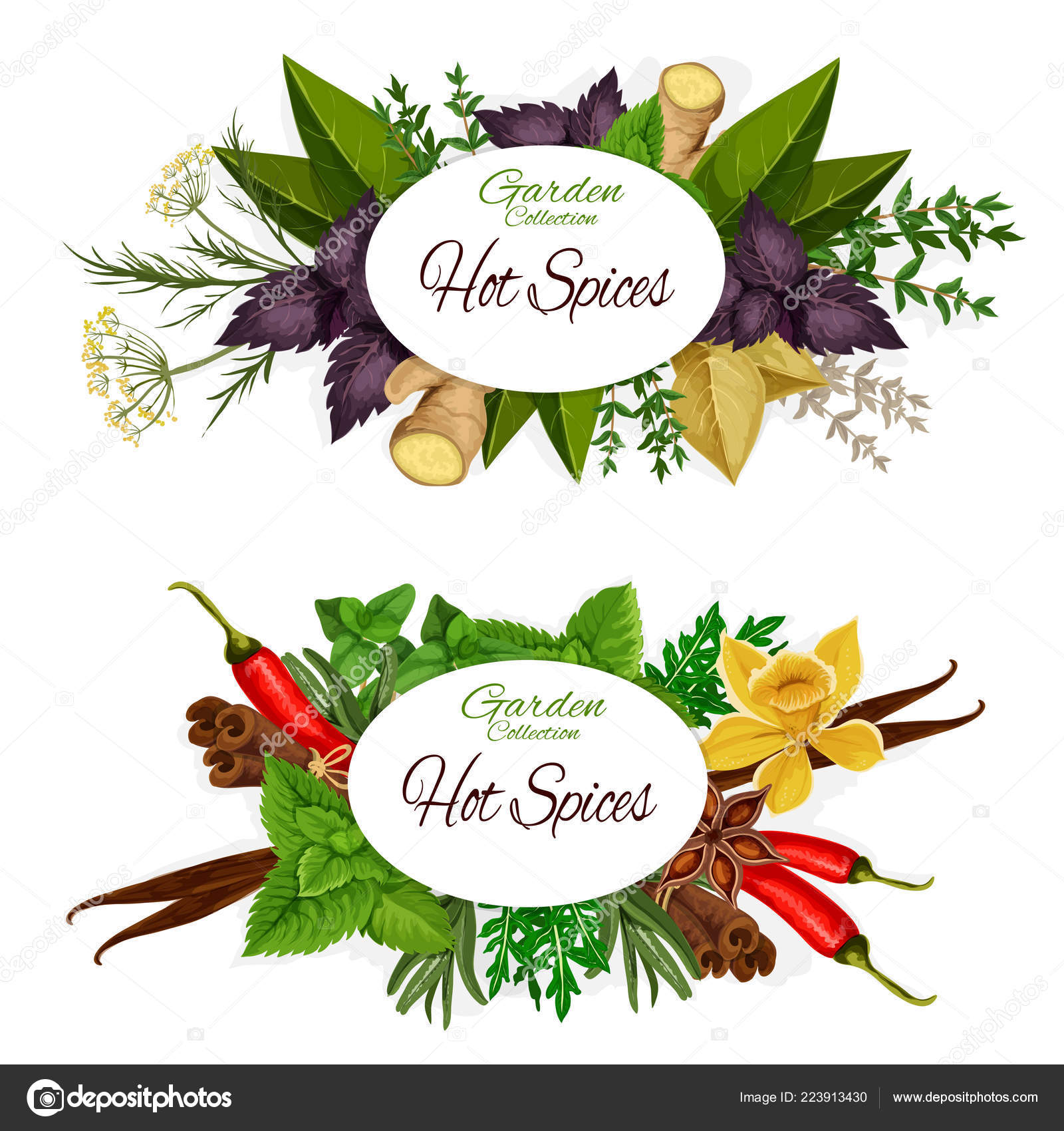 kitchen herb kit medallion cabinets 草药和热香料 调味料横幅 图库矢量图像 c seamartini 223913430 图库矢量图片