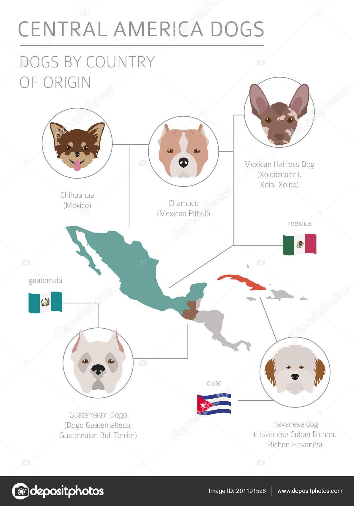 Dogs Country Origin Latin American Dog Breeds Infographic