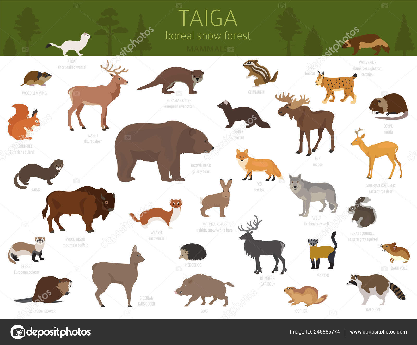 Plant life in the taiga: Taiga Biome Boreal Snow Forest Terrestrial Ecosystem World Map Animals Stock Vector Image By C A7880s 246665774