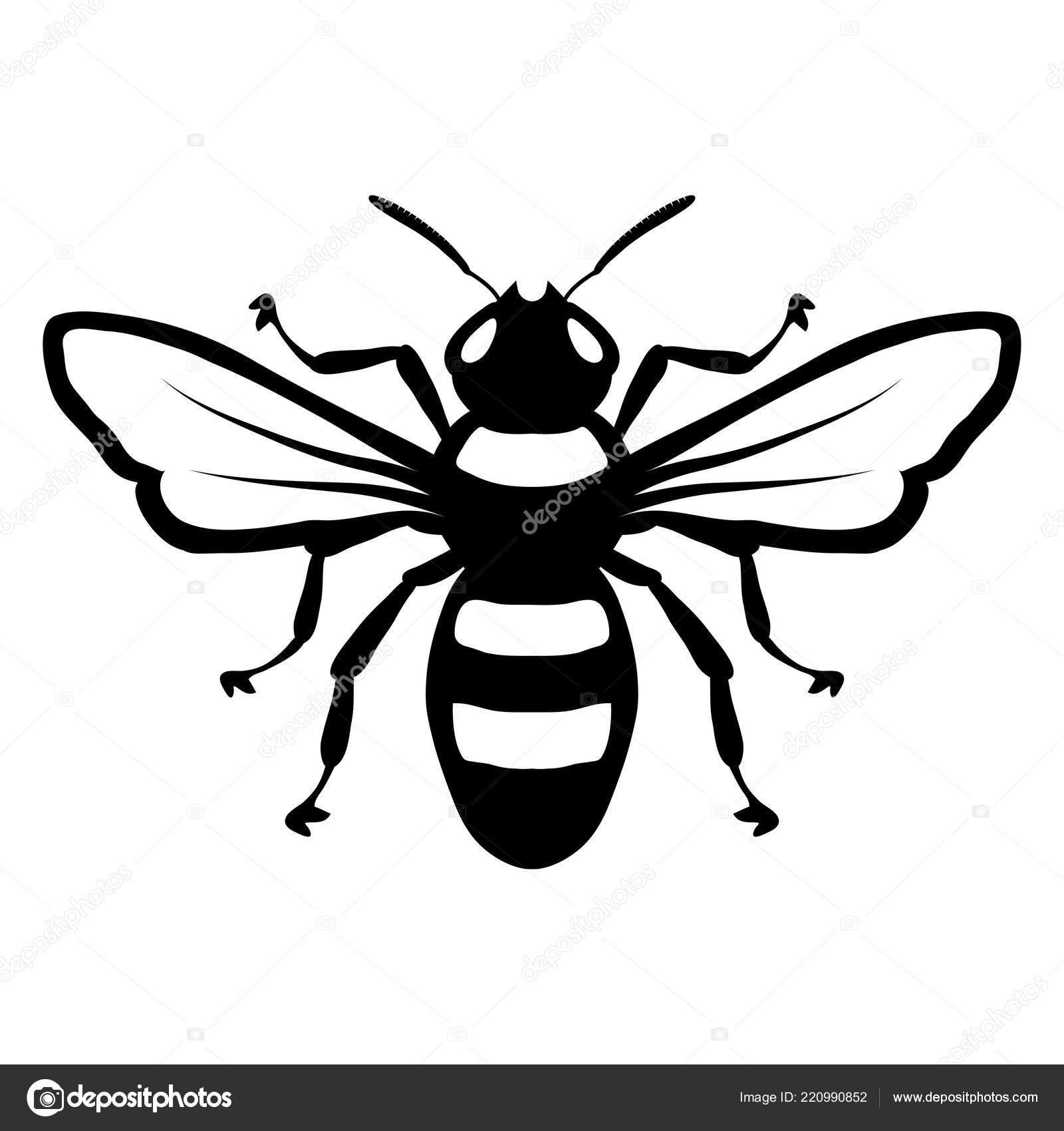 Bee Logo Honey Bee White Background Hand Drawn Sketch Bee