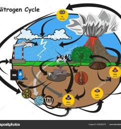 nitrogen cycle infographic diagram showing how nitrogen circulation human environment stock vector [ 1600 x 1433 Pixel ]