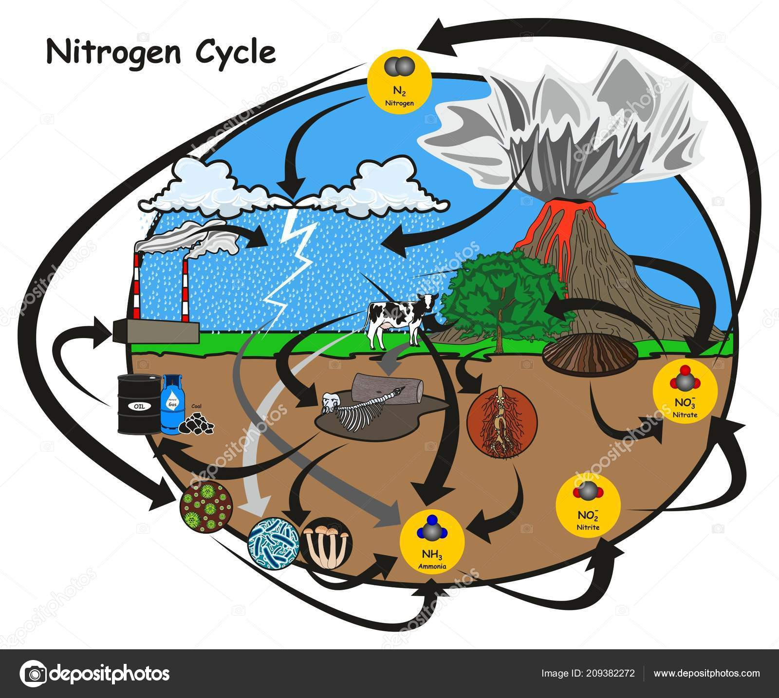 hight resolution of nitrogen cycle infographic diagram showing how nitrogen circulation human environment stock vector