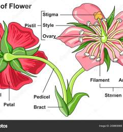 labeled flower parts diagram front back view all parts labeled stock vector [ 1600 x 1093 Pixel ]