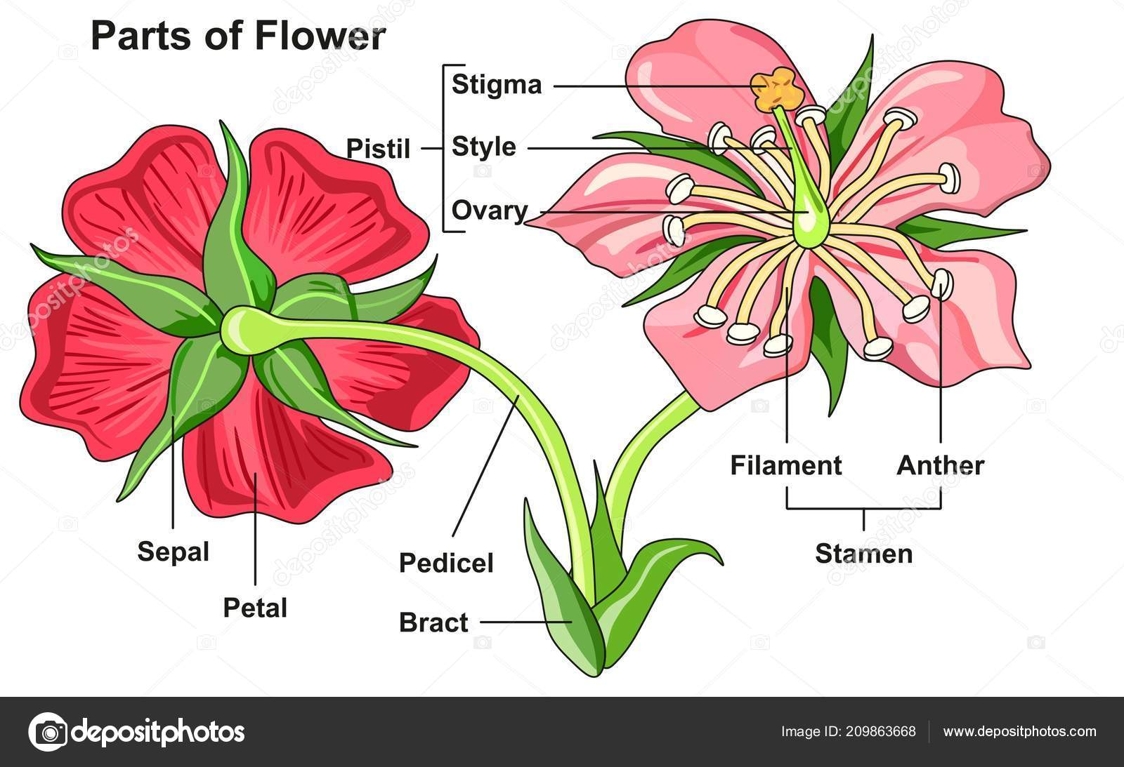 hight resolution of labeled flower parts diagram front back view all parts labeled stock vector