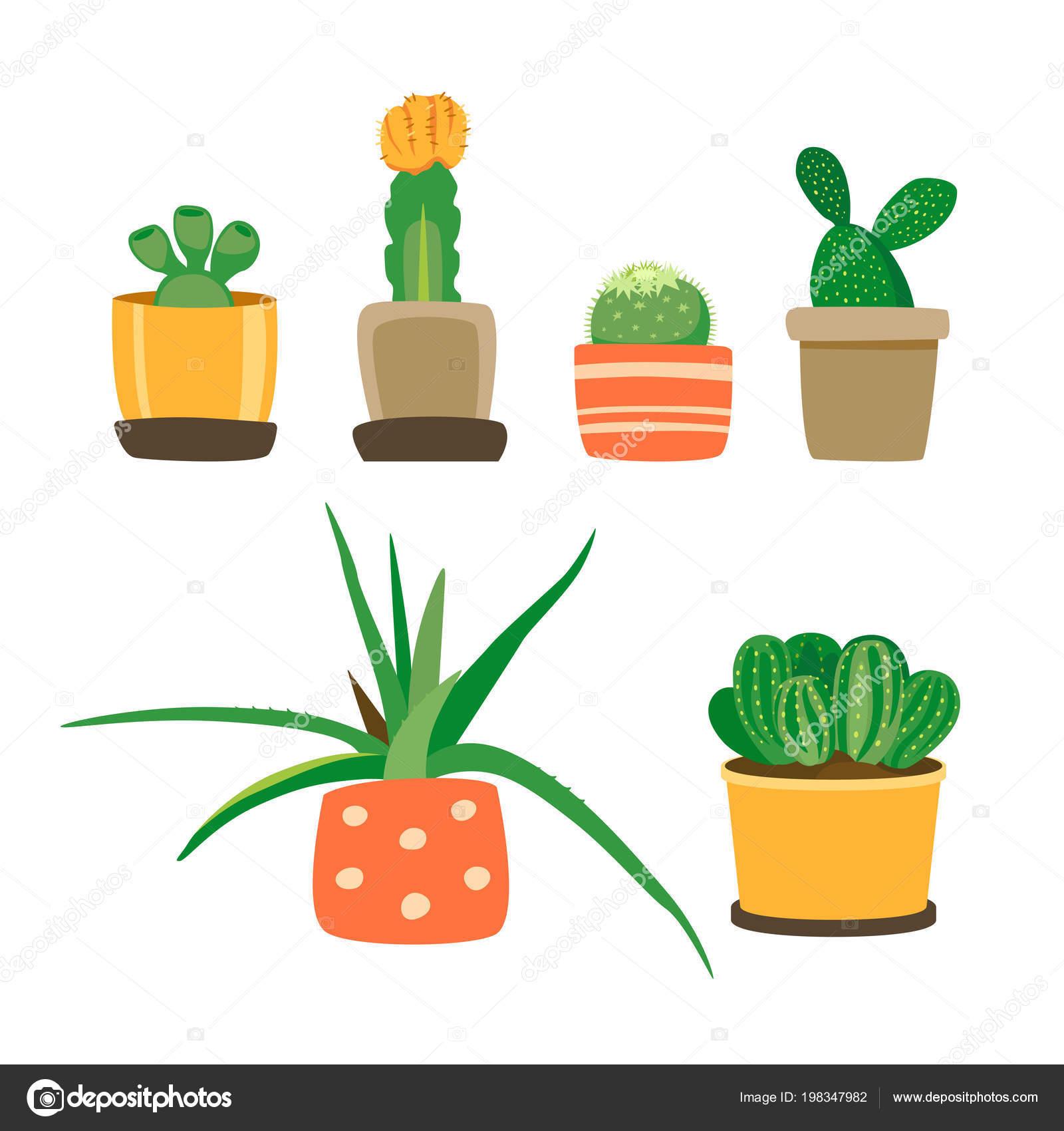 Sukkulenten Zimmerpflanzen Arten