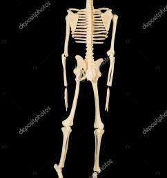 back view human bone structure studio dark background stock photo [ 1067 x 1700 Pixel ]