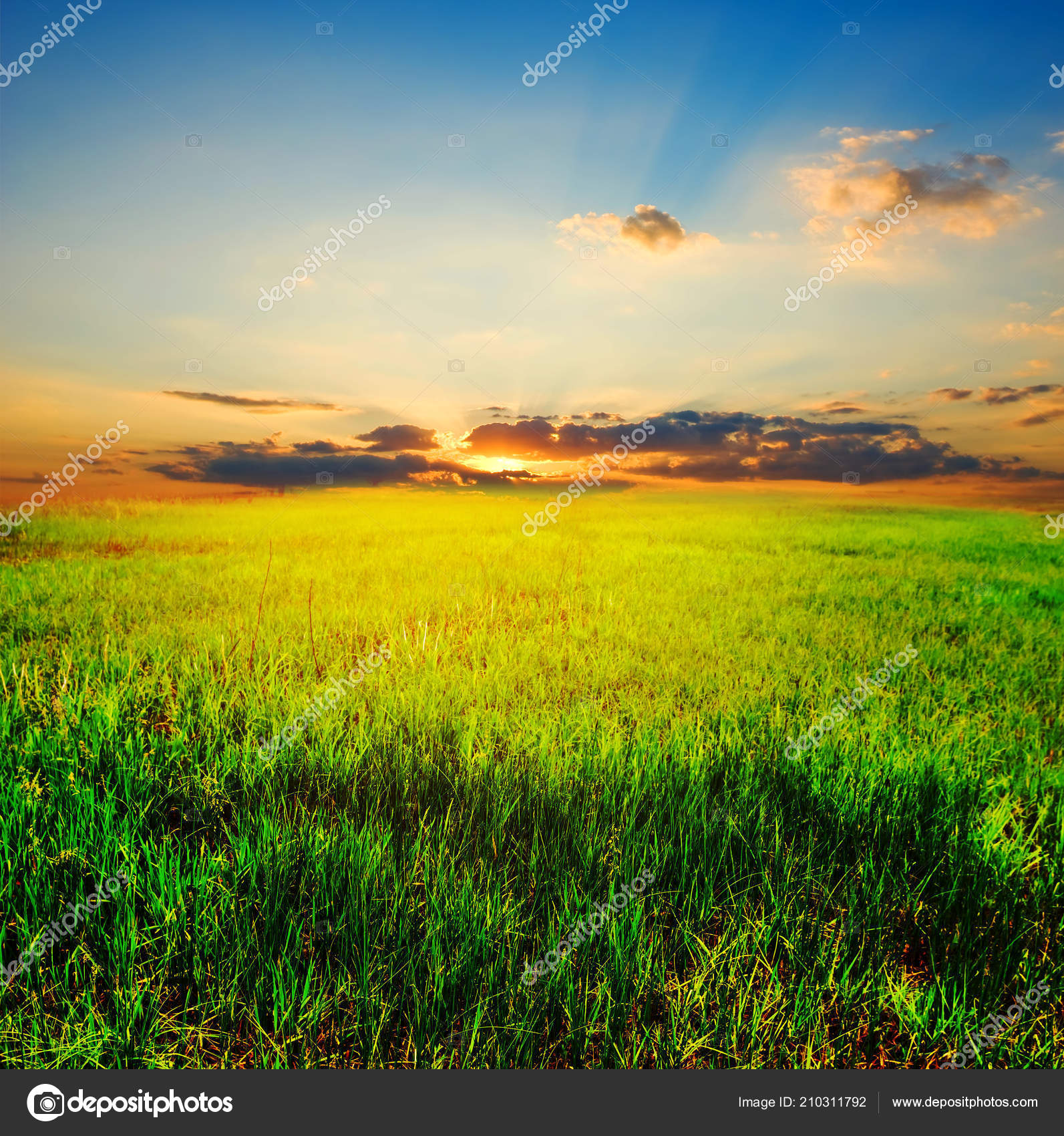 summer plain green grass