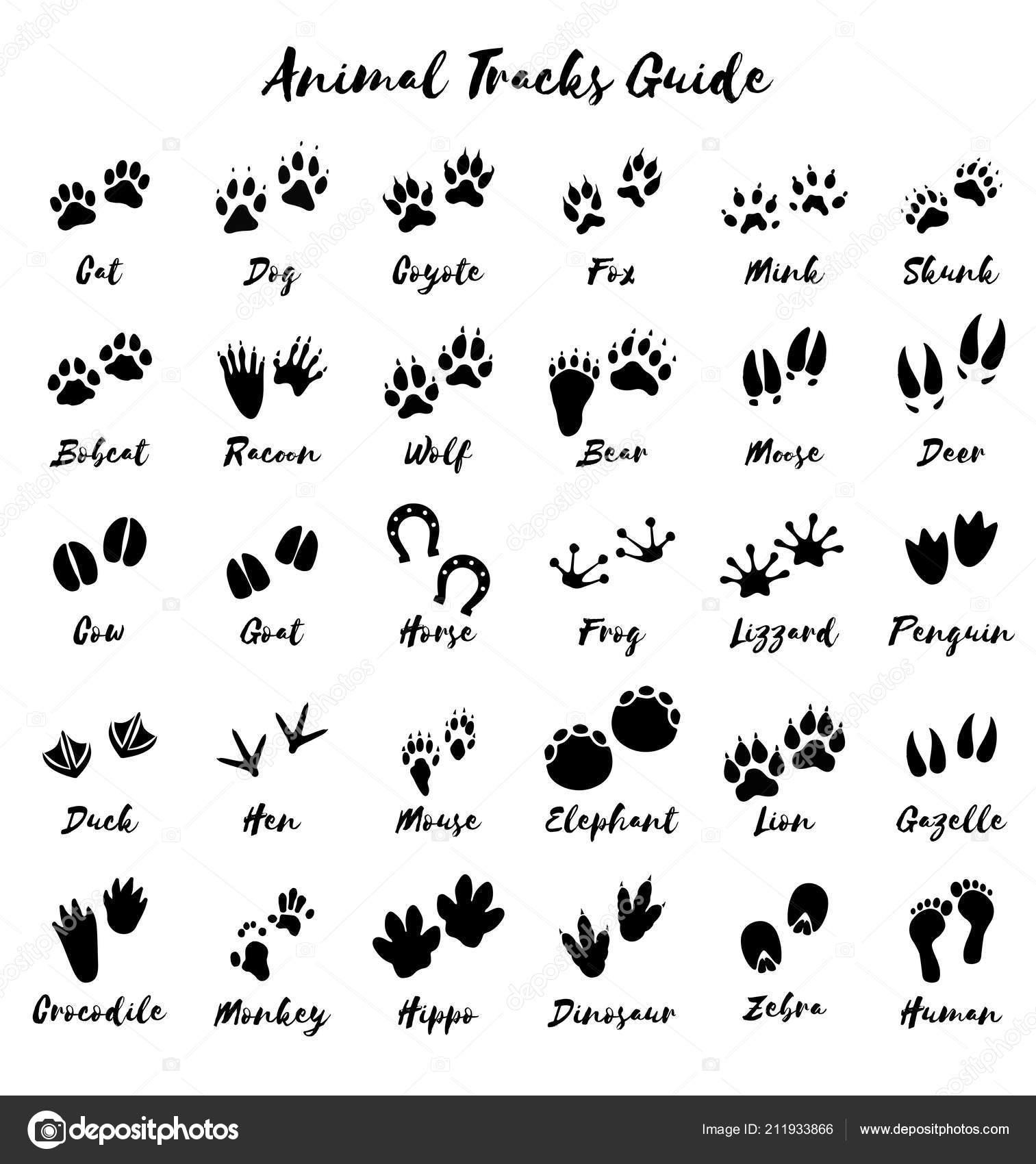 Huellas Animales Vector Guía Impresión Pie — Archivo