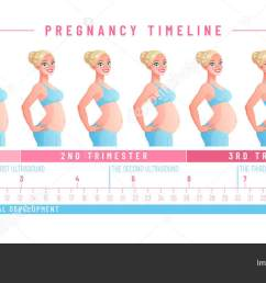 pregnancy timeline by weeks isolated vector illustration stock vector [ 1600 x 715 Pixel ]