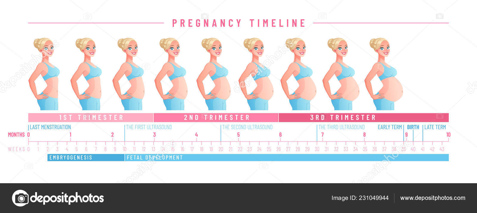 hight resolution of pregnancy timeline by weeks isolated vector illustration stock vector