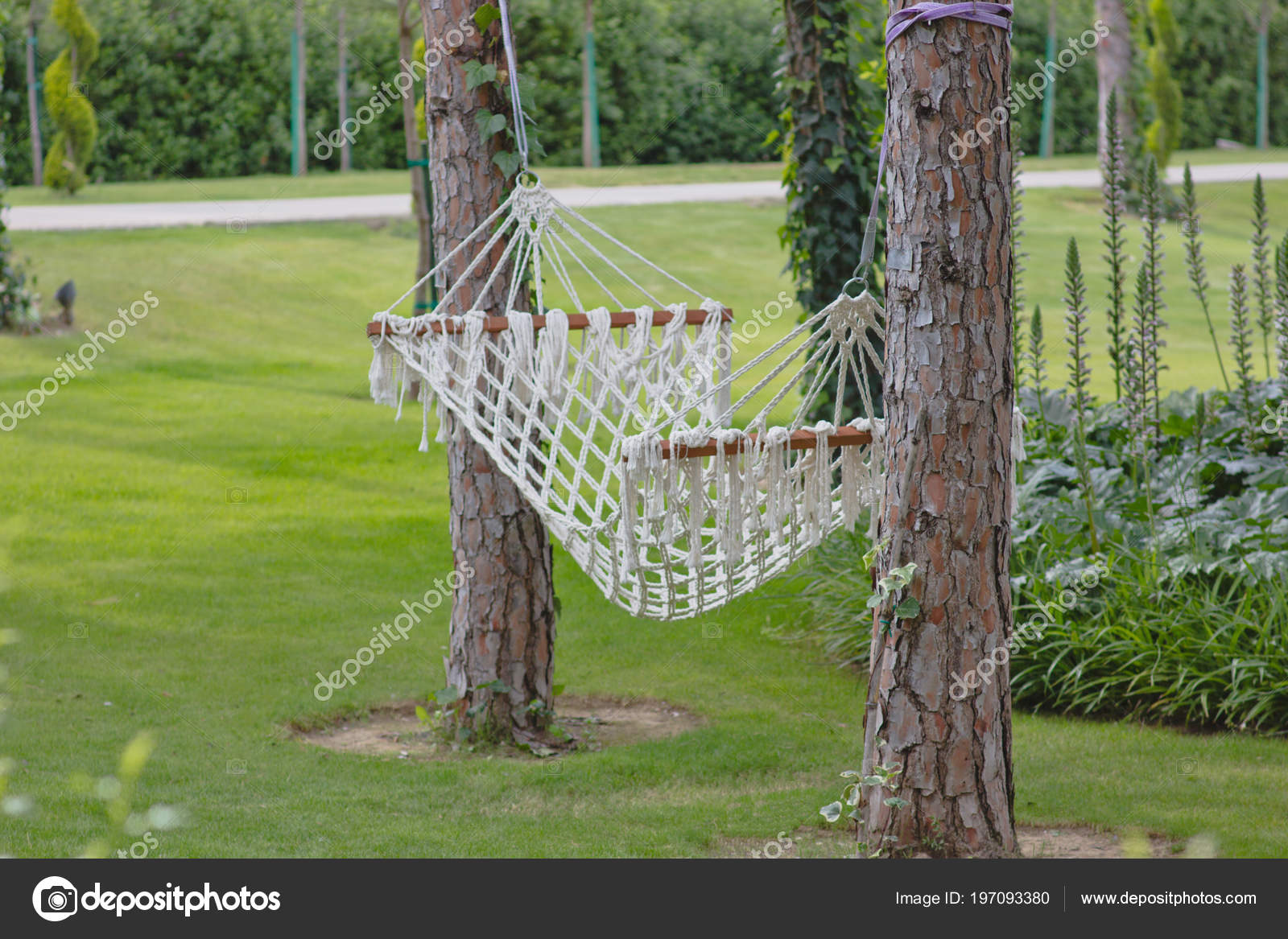 hammock two trees summer