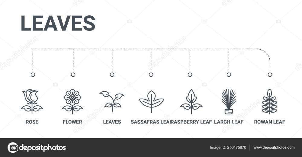 medium resolution of simple set of 7 line icons such as rowan leaf larch leaf raspberry leaf sassafras leaves flower rose from leaves concept on white background vector