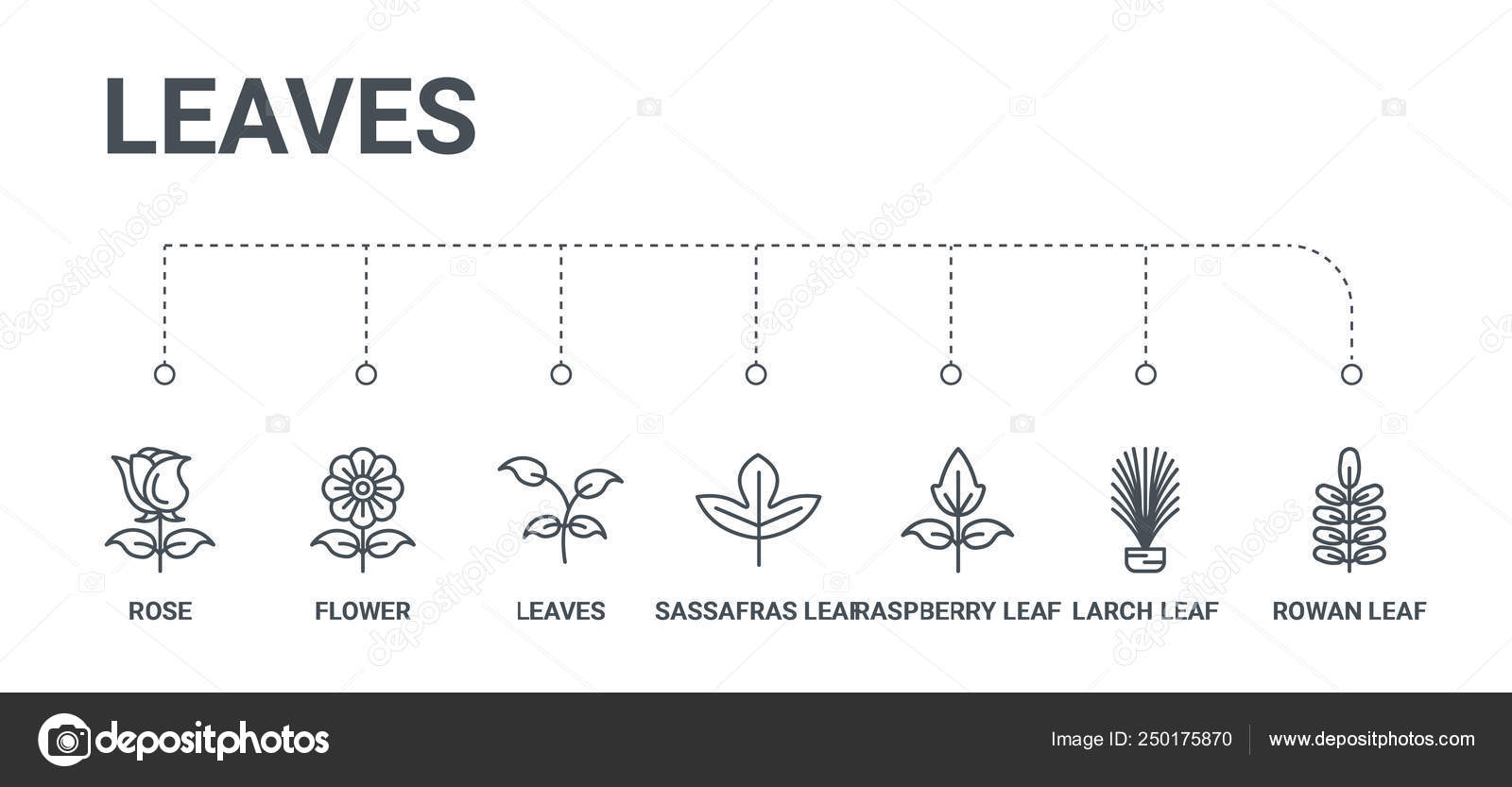 hight resolution of simple set of 7 line icons such as rowan leaf larch leaf raspberry leaf sassafras leaves flower rose from leaves concept on white background vector