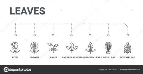 small resolution of simple set of 7 line icons such as rowan leaf larch leaf raspberry leaf sassafras leaves flower rose from leaves concept on white background vector