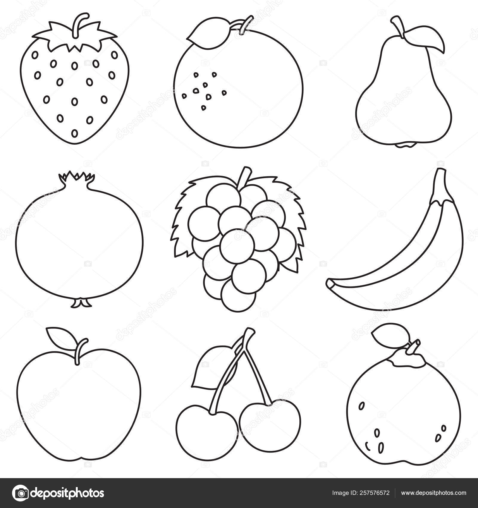 Vector Illustration Fruits Coloring Page