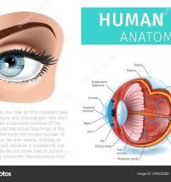 human eye anatomy infographics inside and outside stock vector [ 1600 x 1103 Pixel ]