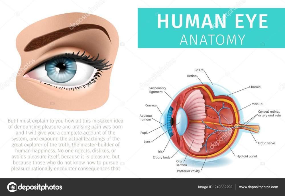 medium resolution of human eye anatomy infographics inside and outside stock vector