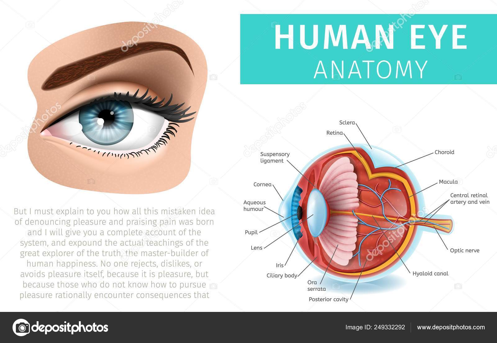 hight resolution of human eye anatomy infographics inside and outside stock vector