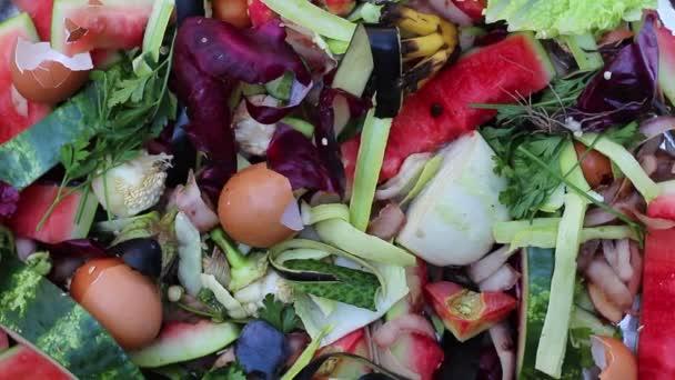 kitchen composter hood ideas 蔬菜厨房废料如果皮蚯蚓堆肥有机废弃物关闭 图库视频影像 c fevziie