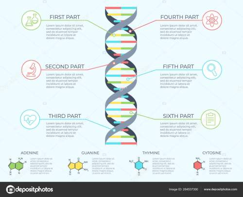 small resolution of dna infographic genetic spiral genomic model molecule diagram and adn pattern structure chart medicine molecular rna chromosome infographics or dna gene