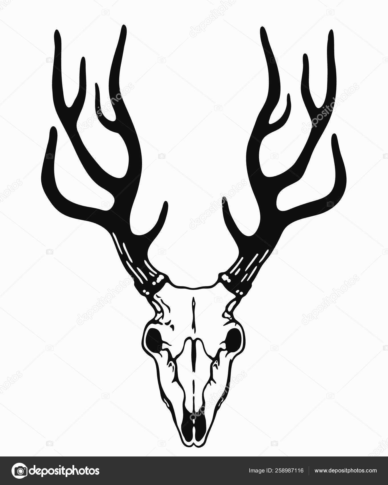 Deer Skull Vector : skull, vector, Simple, Skull, Black, Horns, Vector, Image, Inkystory, Stock, 258987116