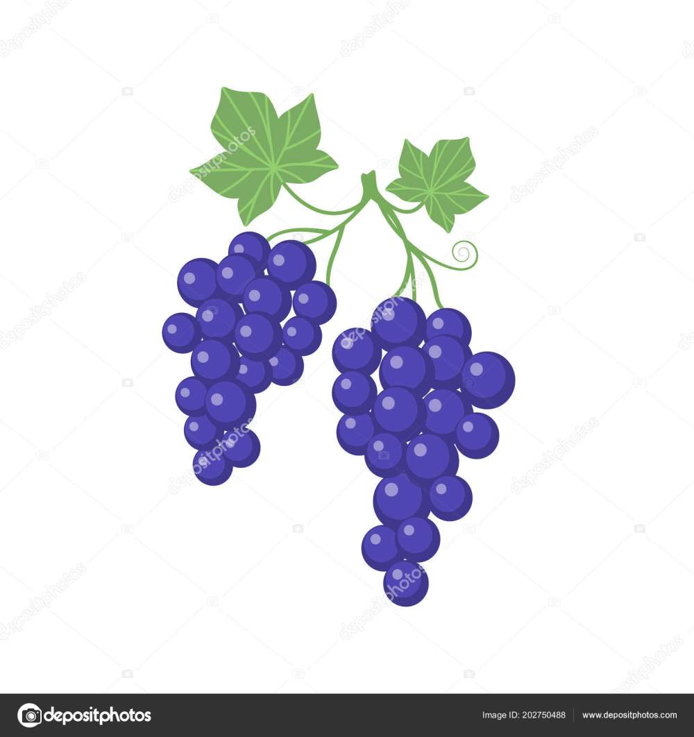 medium resolution of grapes clipart cartoon vine leaves purple grapevine stock vector