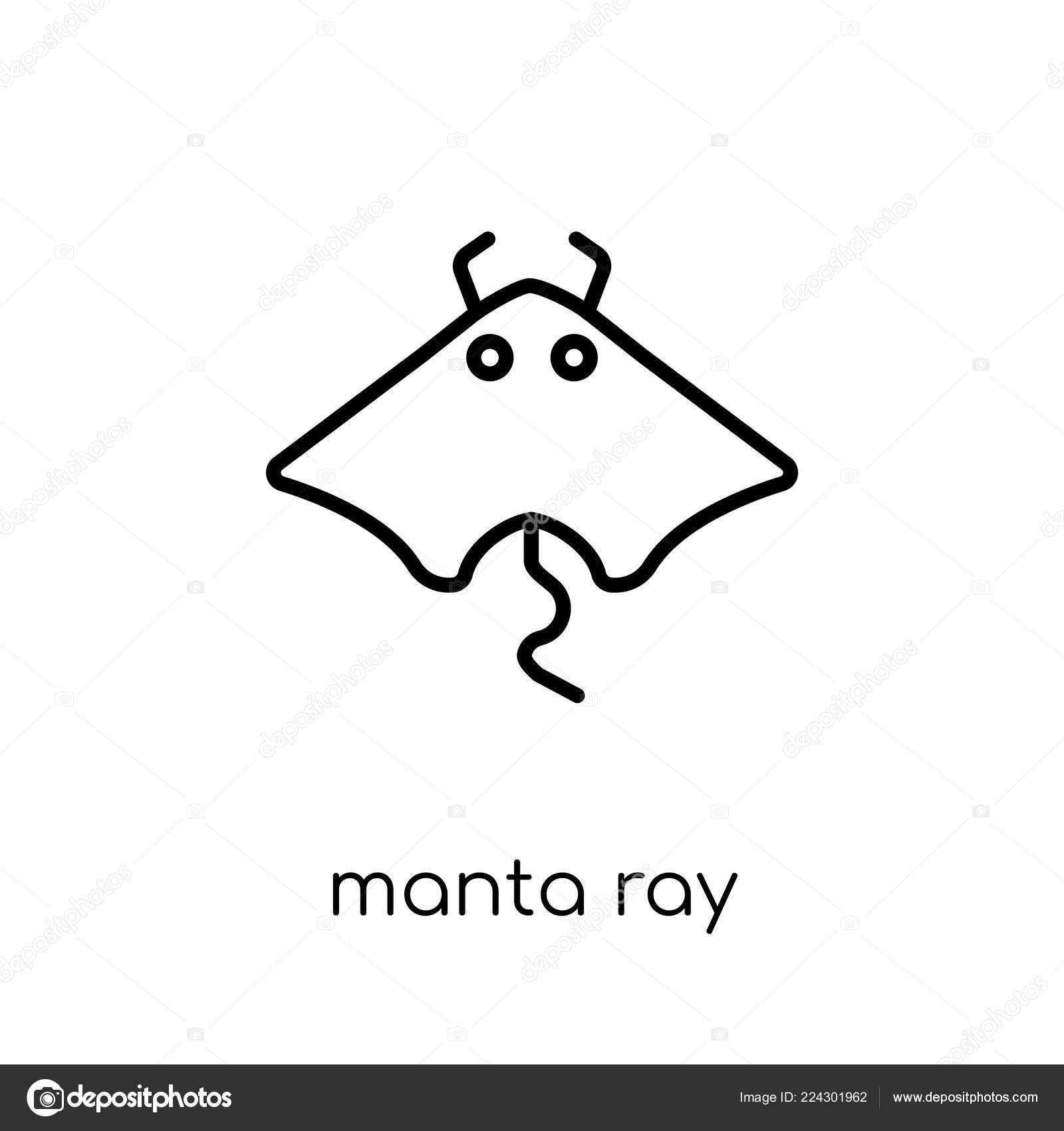 hight resolution of manta ray icon trendy modern flat linear vector manta ray stock vector