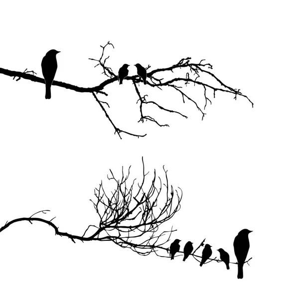 Vector silhouette of the bird on branch — Stock Vector