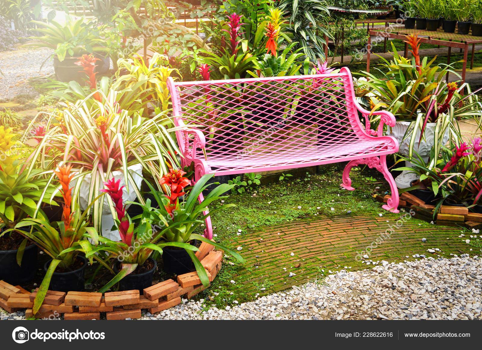 Plante Verte Pour Terrasse Exterieur Nos Rayons Thionville