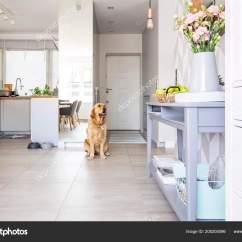 Kitchen Console Paint 快乐的狗坐在露天厨房内部的真实照片与鲜花和绿色的苹果放置在蓝色控制台 快乐的狗坐在露天厨房内部的真实照片与鲜花和绿色的苹果放置在蓝色控制台表 照片作者photographee Eu