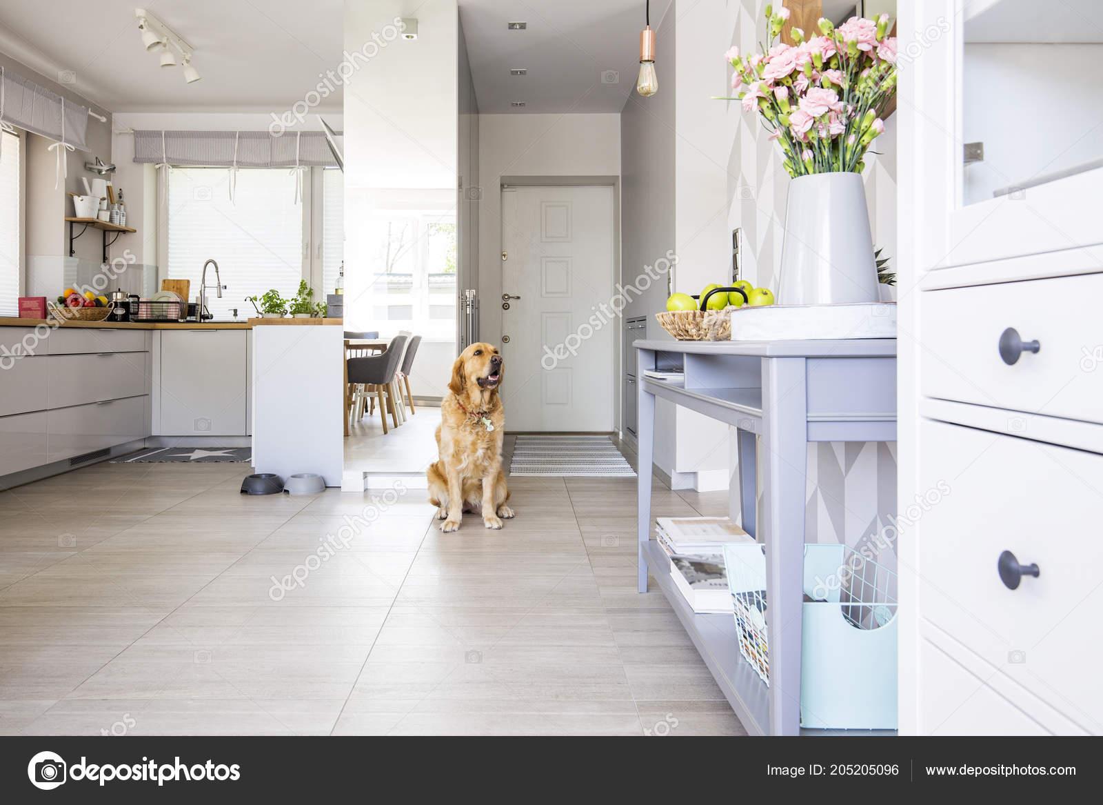 kitchen console table rolling chairs 快乐的狗坐在露天厨房内部的真实照片与鲜花和绿色的苹果放置在蓝色控制台 快乐的狗坐在露天厨房内部的真实照片与鲜花和绿色的苹果放置在蓝色控制台表 照片作者photographee eu