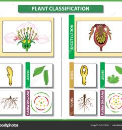 plant classification monocots vs dicots difference and comparison useful for study botany and [ 1600 x 1374 Pixel ]
