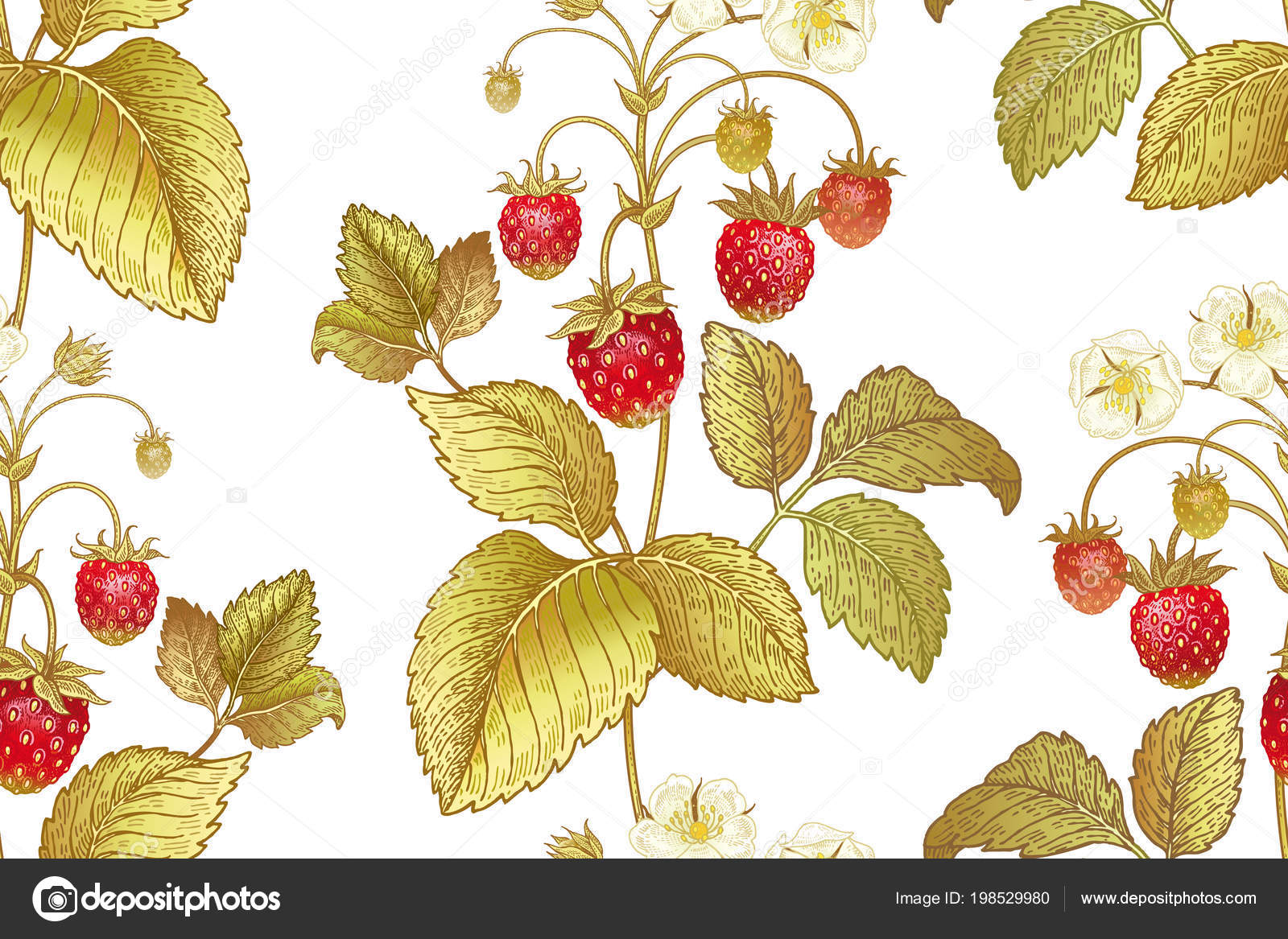 kitchen design template building a cabinet 与草莓的花朵和浆果的白色背景的无缝植物模式维多利亚风格矢量插图厨房 与草莓的花朵和浆果的白色背景的无缝植物模式 老式 维多利亚风格 矢量插图 厨房设计模板 食品 纸 纺织品包装 矢量图片sasha kasha