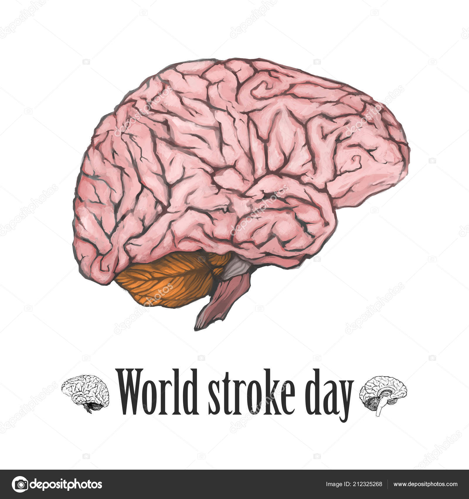 hight resolution of  world stroke day illustration digital painted brain isolated on a white background realistic drawing the part of the human body stock image