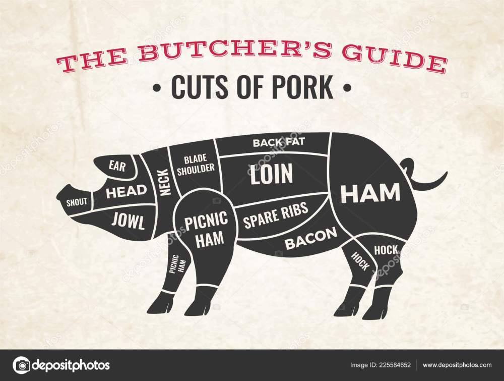 medium resolution of butchery diagram with silhouette of pig and cuts of pork on background of old paper vector illustration vector by macrovector