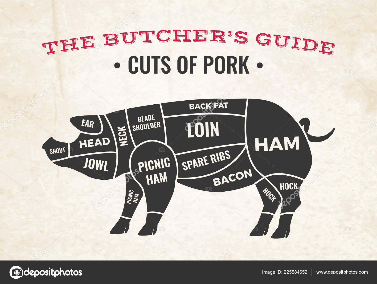 hight resolution of butchery diagram with silhouette of pig and cuts of pork on background of old paper vector illustration vector by macrovector