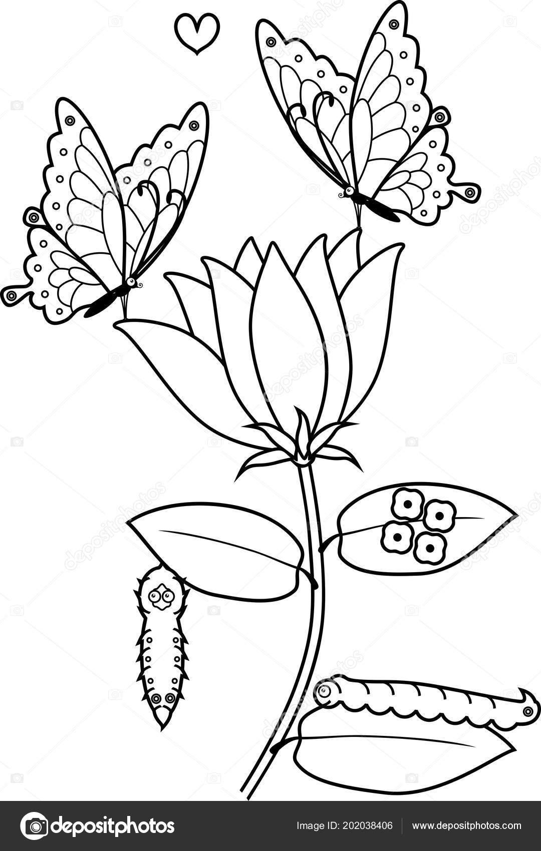 Página Para Colorear Ciclo Vida Mariposa Flor — Vector de