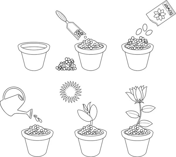 Instructions How Plant Flower Six Easy Steps Step Step