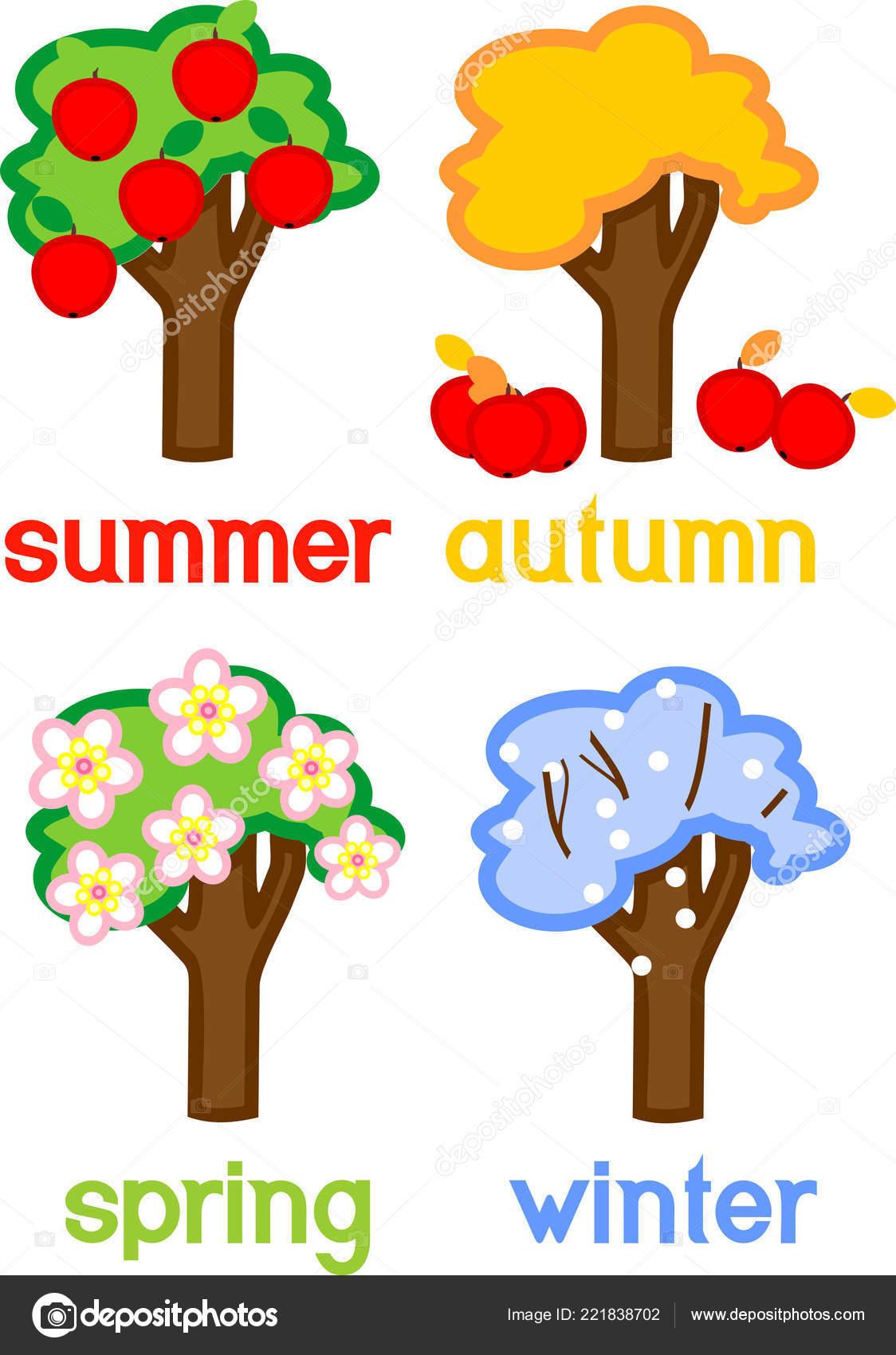 Four Seasons Apple Tree Isolated White Background Life
