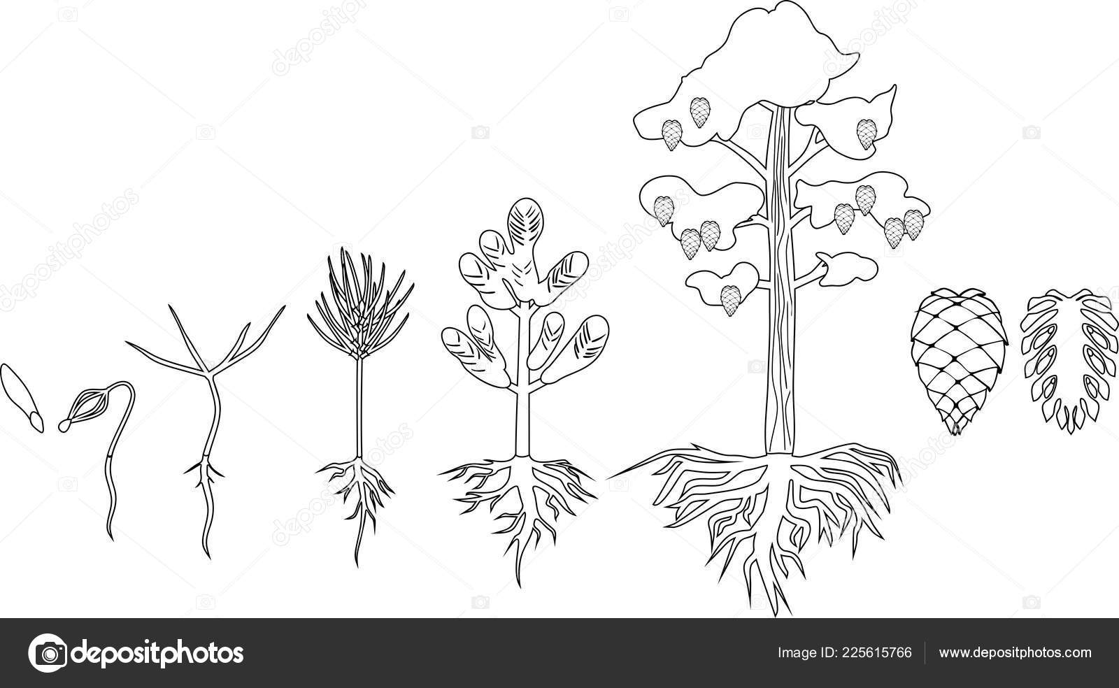 Coloring Pages Kids 2020: 31 Plant Life Cycle Coloring Pages