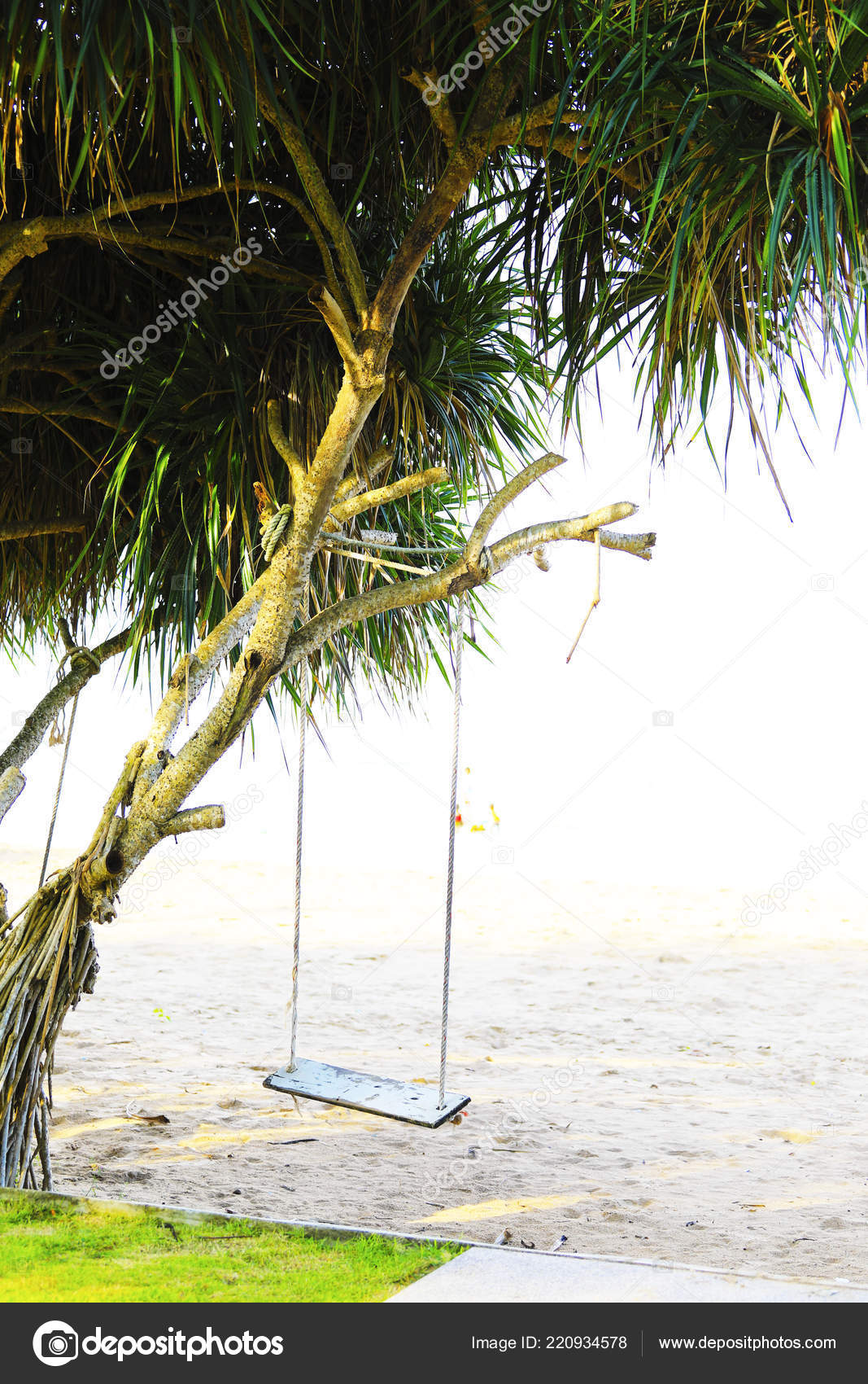 hanging tree swing chair healthy start high wooden beach thailand stock photo