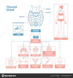 medical science vector illustration diagram biological scheme with iodine thyroid hormones t3 and t4 affecting vector by  [ 1600 x 1700 Pixel ]