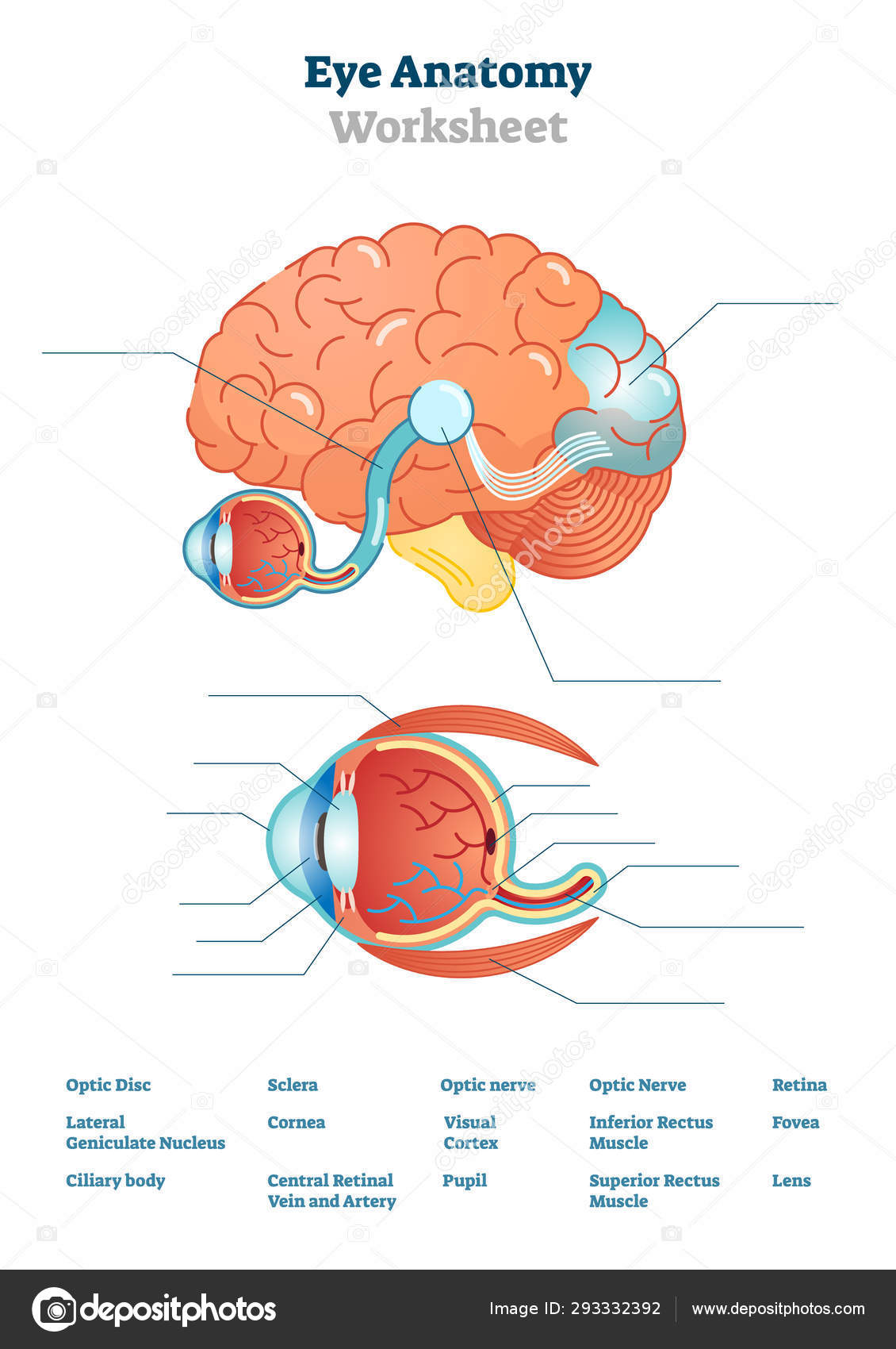 Eye Anatomy Blank Worksheet Printable Test Illustrations