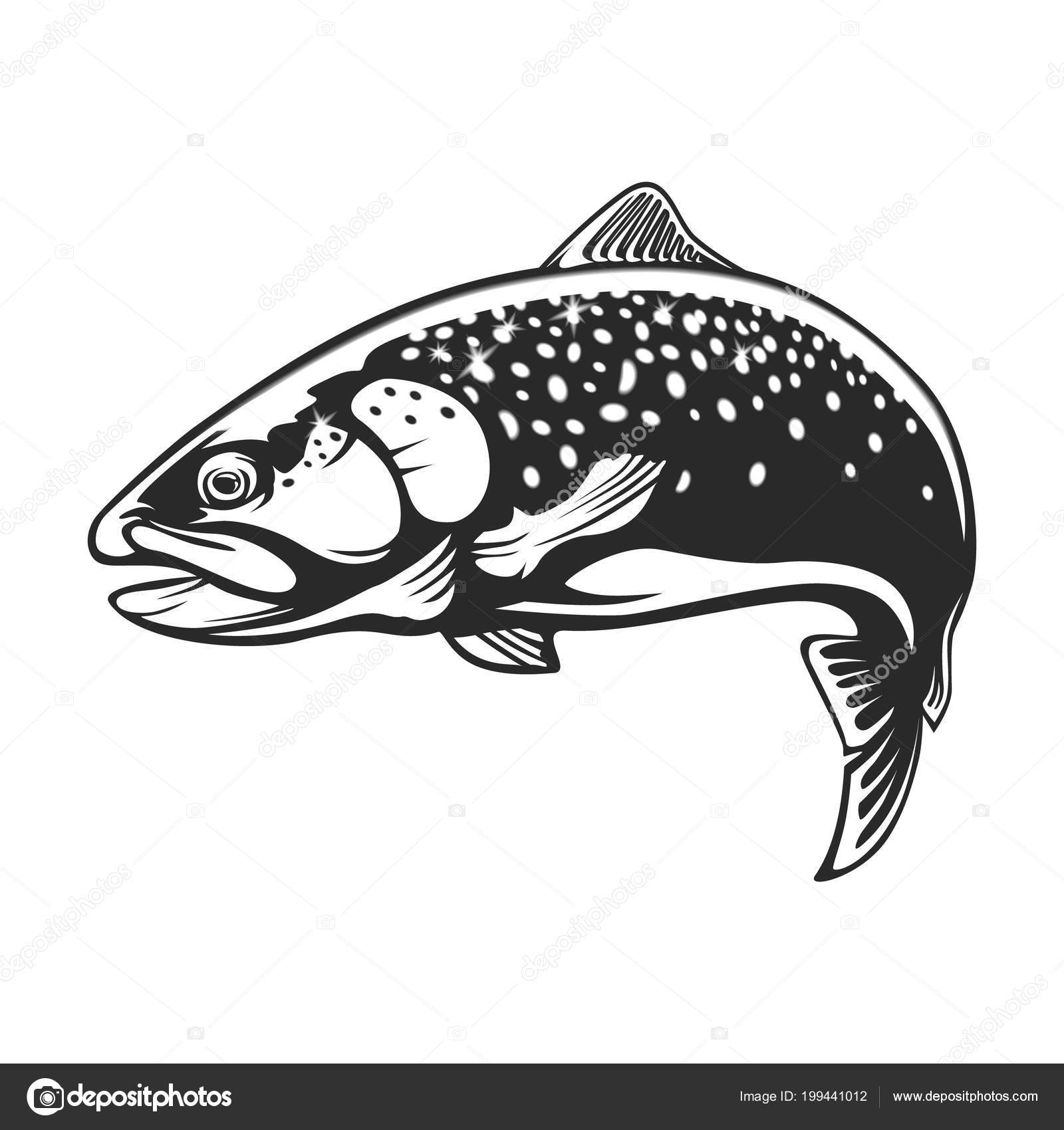 Rainbow Trout Jumping Out Water Salmon Isolated White