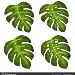 Monstera Deliciosa Plant Leaf Vector Illustration Vector Image By C 4zeva Vector Stock 315408788