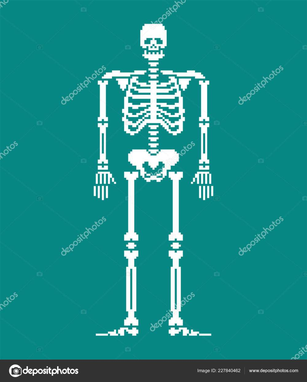 medium resolution of skull and bones anatomy 8 bit pixelate pelvic bone and ribs spine and vertebrae human bone system 16bit old game computer graphics style vector by