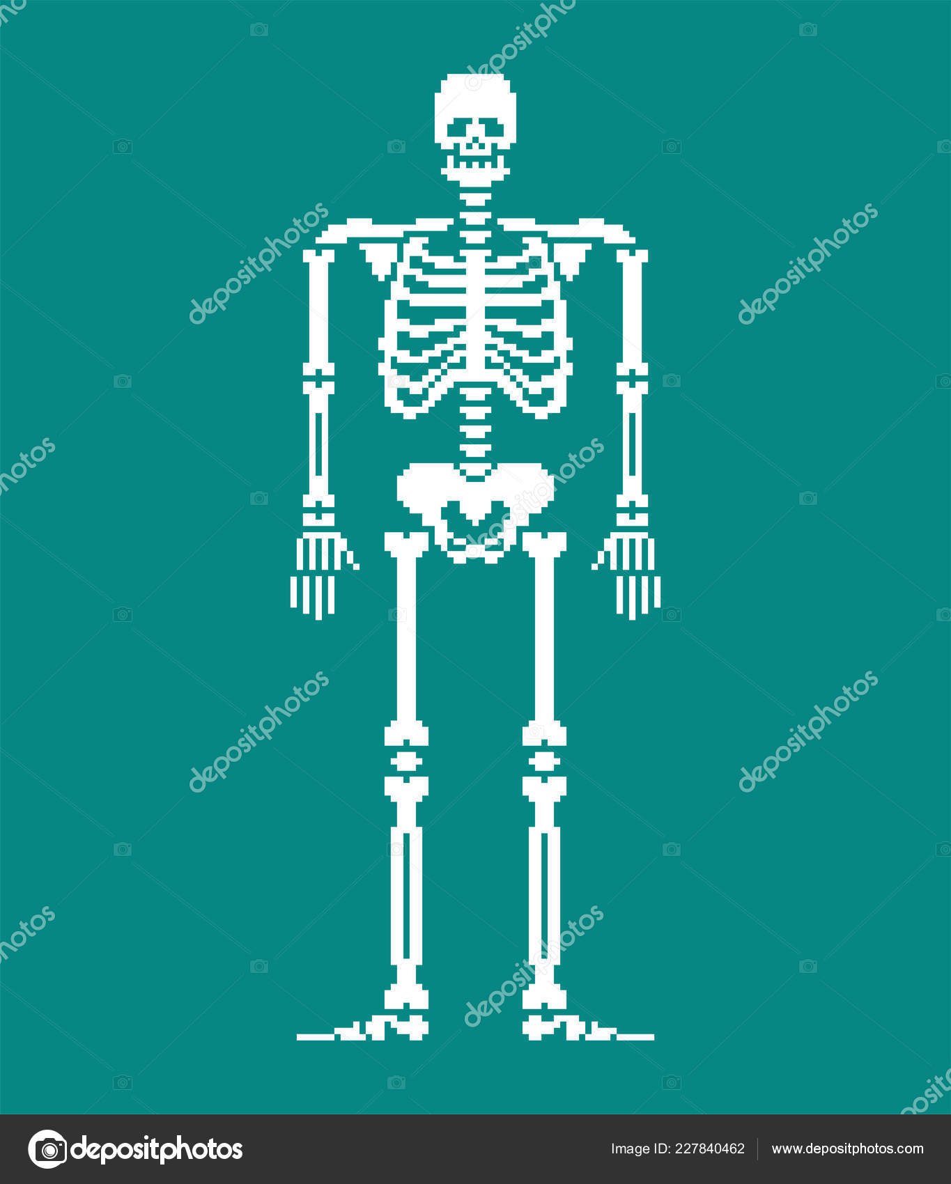 hight resolution of skull and bones anatomy 8 bit pixelate pelvic bone and ribs spine and vertebrae human bone system 16bit old game computer graphics style vector by