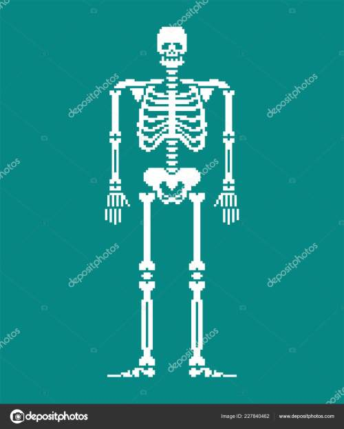 small resolution of skull and bones anatomy 8 bit pixelate pelvic bone and ribs spine and vertebrae human bone system 16bit old game computer graphics style vector by
