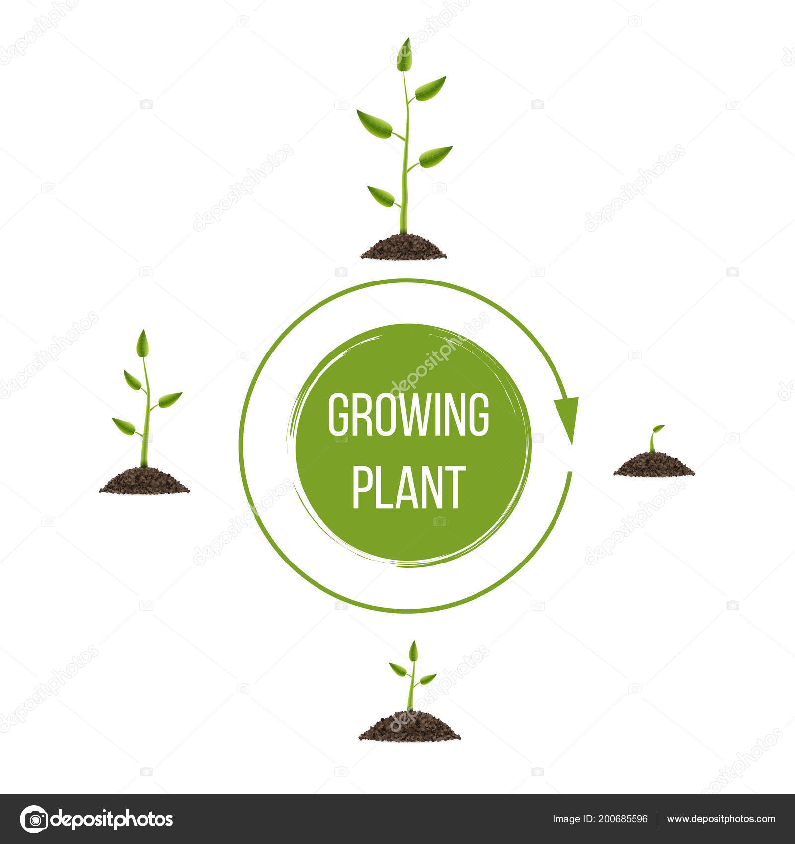 hight resolution of creative vector illustration of growth up green tree with leaf isolated on background business cycle diagram development art design seedling gardening